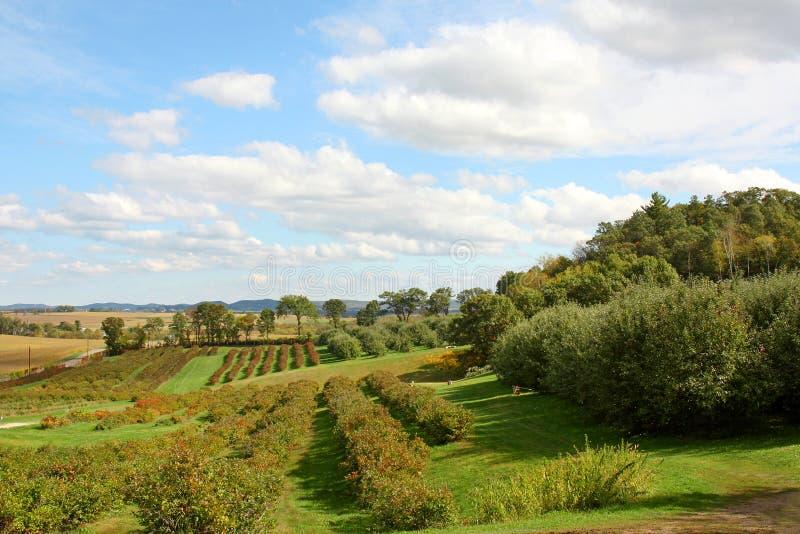 Sopa landskap för Apple fruktträdgård royaltyfri fotografi