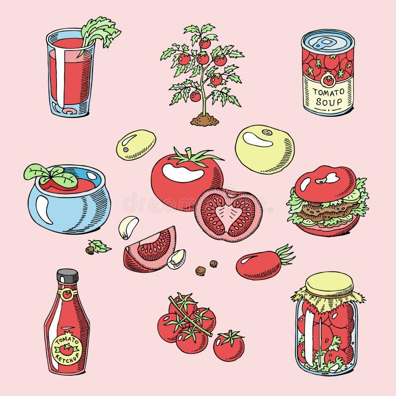 Sopa y goma jugosas de la salsa de tomate de la salsa de la comida de los tomates del tomate con los ingridients orgánicos del ej stock de ilustración