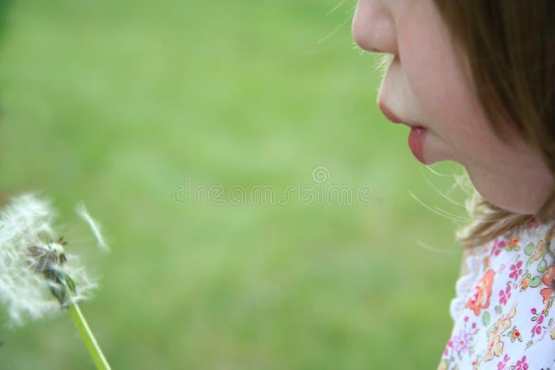 Soplar un germen del diente de león foto de archivo libre de regalías