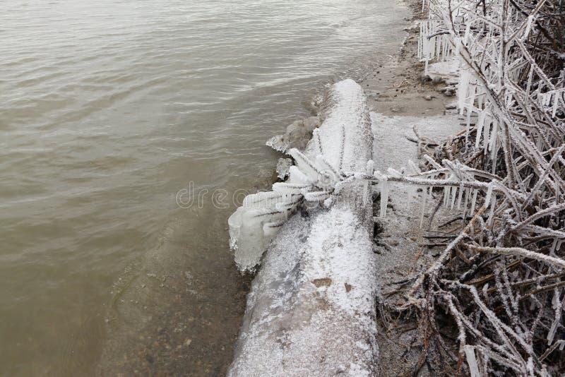 Sople z oszraniają na gałąź na brzeg marznięcie rzeka obrazy stock