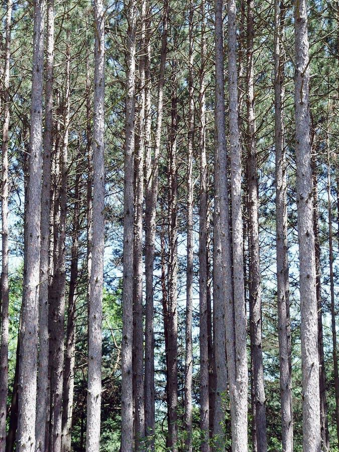 Soporte de árboles fotos de archivo