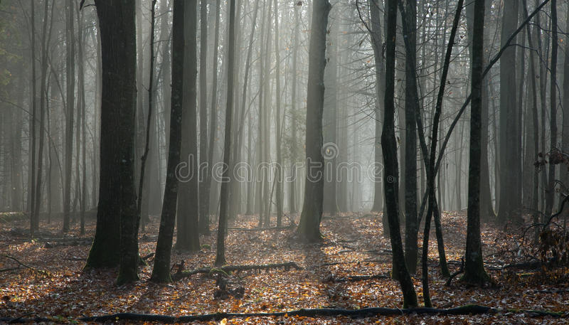 Soporte de hojas caducas de la primavera temprana imagen de archivo