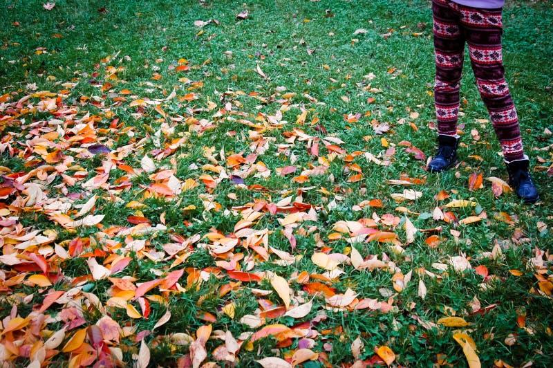 Soporte de la chica joven delante de las hojas de arce otoñales fotos de archivo