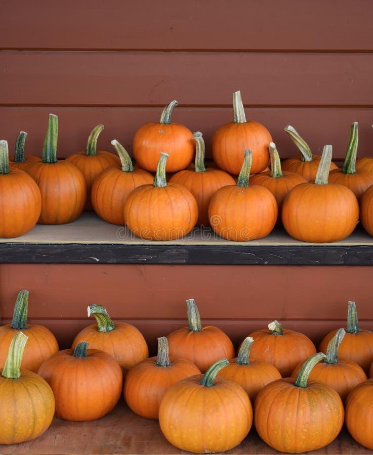 Soporte de la granja - Autumn Harvest Sugar Pumpkins fotografía de archivo