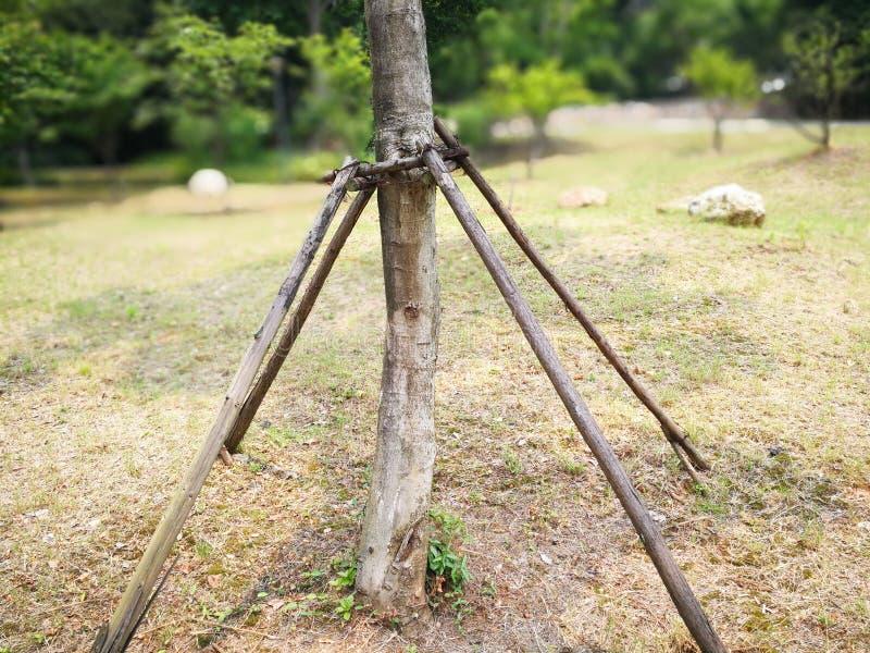 Soporte de madera para proteger el árbol imágenes de archivo libres de regalías