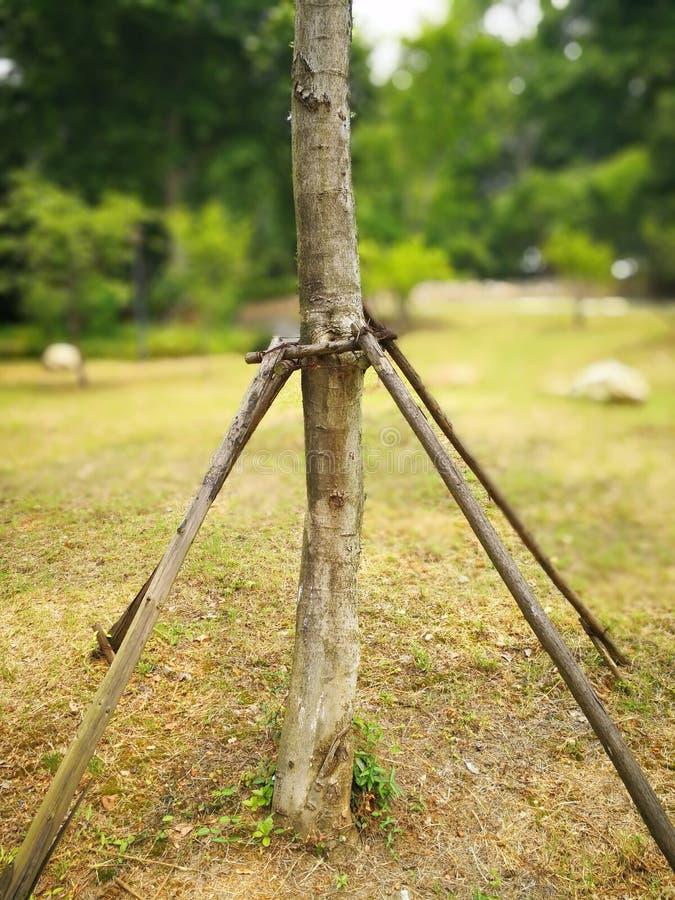 Soporte de madera para proteger el árbol fotografía de archivo libre de regalías