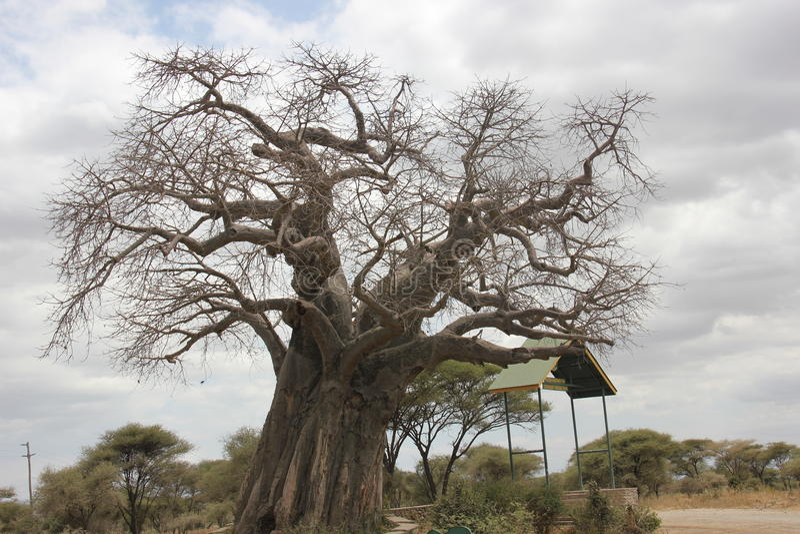 Soporte del árbol solo fotografía de archivo