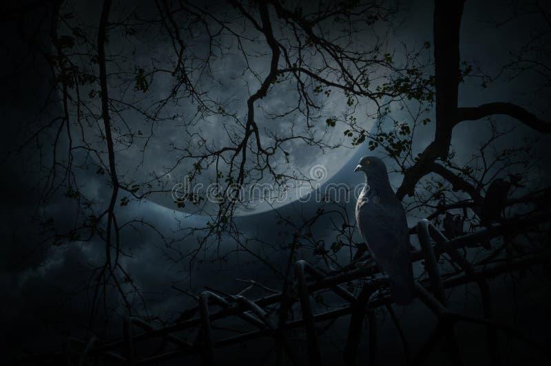 Soporte del pájaro en la cerca vieja sobre el árbol muerto, la luna y el cielo nublado, Mys imagenes de archivo