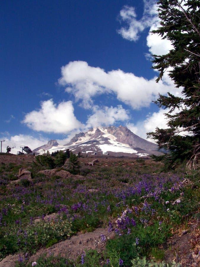 Soporte Hood Above Timberline Lodge Oregon fotografía de archivo libre de regalías