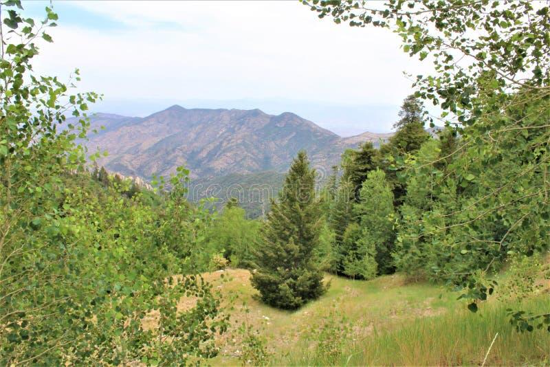 Soporte Lemmon, Santa Catalina Mountains, bosque del Estado de Coronado, Tucson, Arizona, Estados Unidos foto de archivo