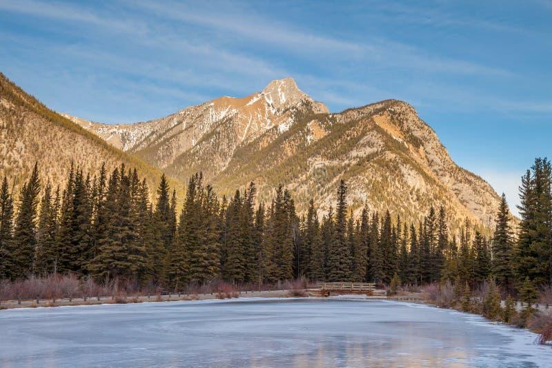 Soporte Lorrete en Kananaskis en el canadiense Rocky Mountains, Alberta, Canadá imagen de archivo