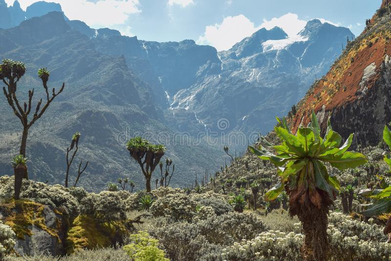 Soporte Stanley en las montañas de Rwenzori, Uganda imagen de archivo libre de regalías