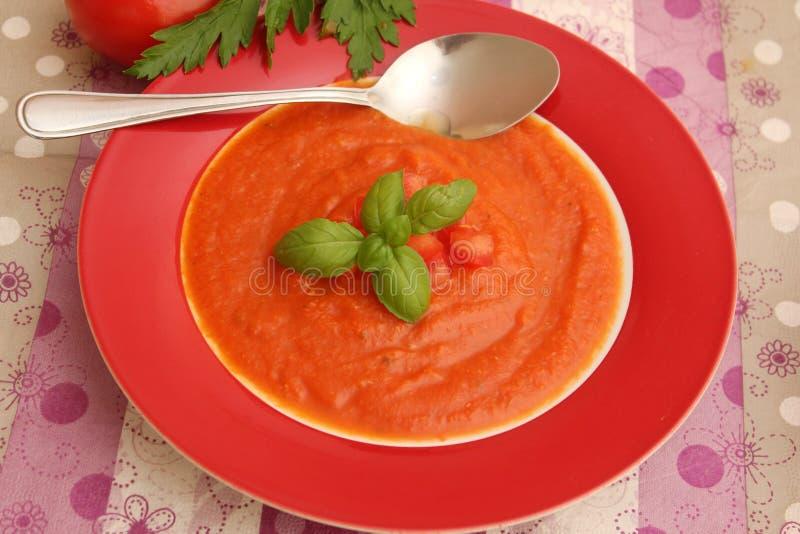 Soppa av tomater fotografering för bildbyråer