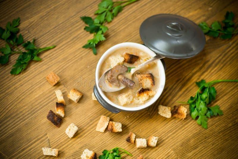 Soppapuré med champinjoner och krutonger i en bunke arkivfoton