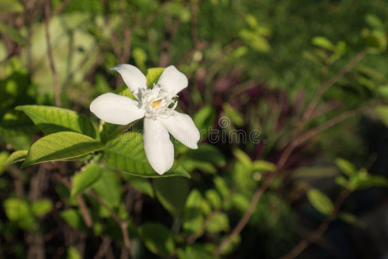 Sopra crescita del fiore fotografie stock