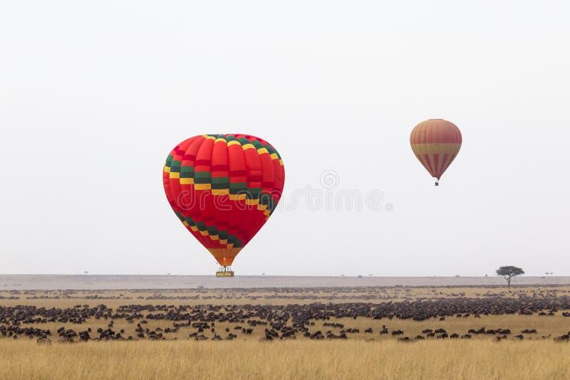 Sopra i grandi greggi dell'Africa Volo in una mongolfiera Il Kenia, Africa immagine stock