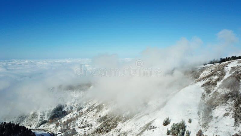 Sopra le nuvole nelle montagne nevose Abete rosso verde crescente Ate ha coperto di neve immagini stock