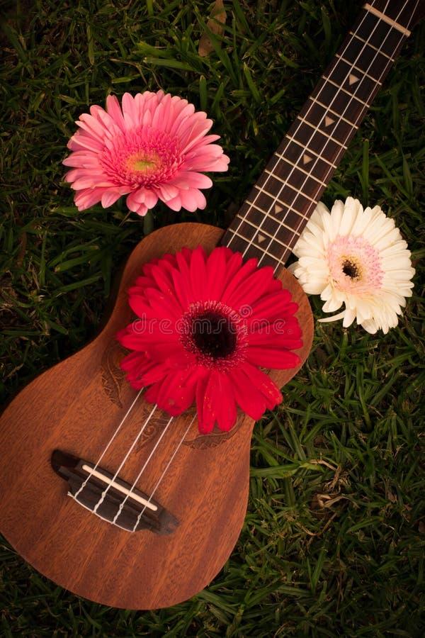 Soprano da uquelele decorado com flores do gerbera imagem de stock royalty free