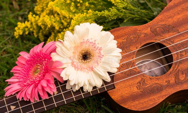 Soprano da uquelele decorado com flores do gerbera imagens de stock royalty free