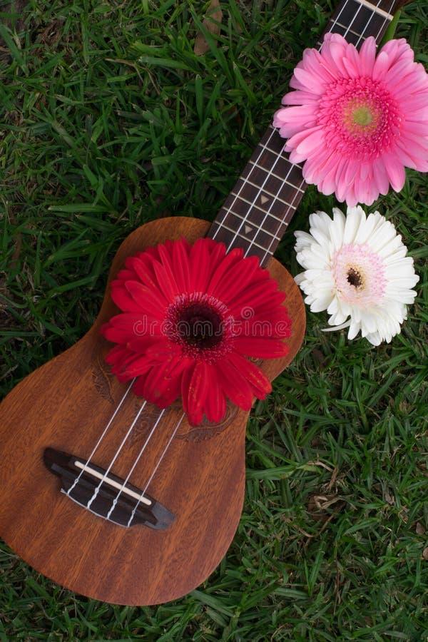 Soprano da uquelele decorado com flores do gerbera fotos de stock royalty free