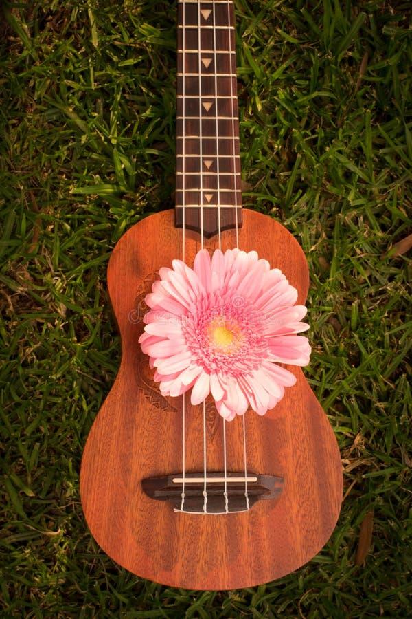 Soprano del ukelele adornado con las flores del gerbera foto de archivo libre de regalías