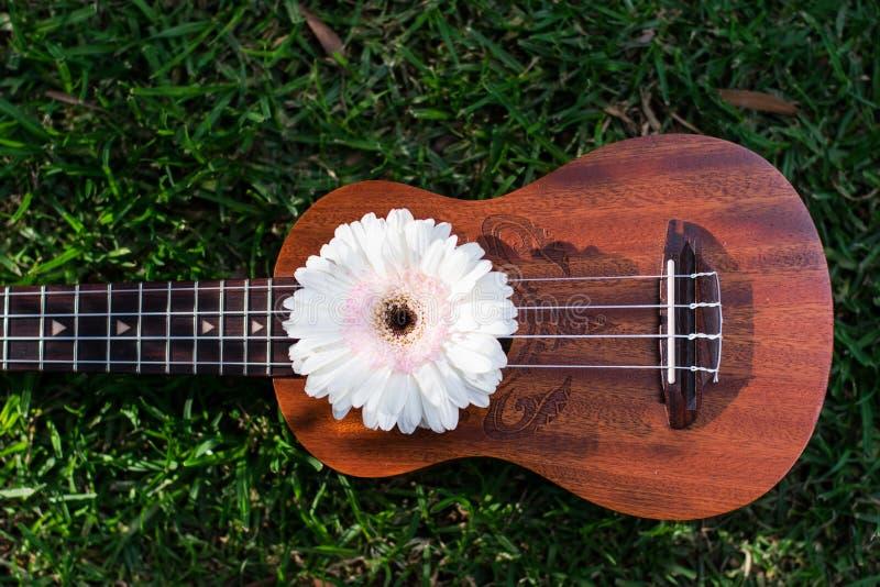 Soprano del ukelele adornado con las flores del gerbera imágenes de archivo libres de regalías