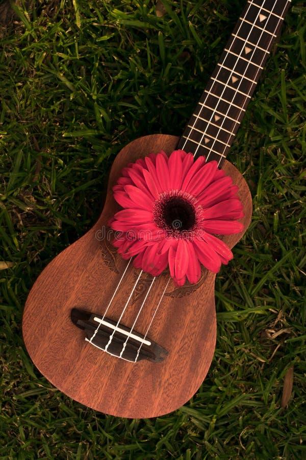 Soprano delle ukulele decorato con i fiori della gerbera immagine stock