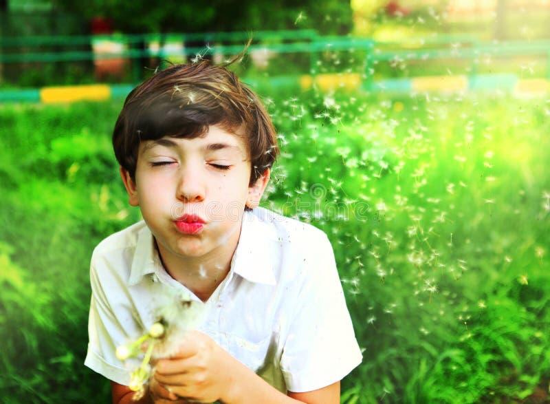 Sopro considerável do menino do Preteen em dentes-de-leão no dia ensolarado do verão imagens de stock royalty free