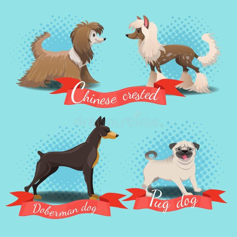Sopro de pó com crista com crista, chinês chinês, cão do pug, cão do doberman ilustração do vetor