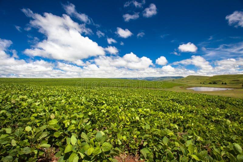 Sopros azuis da nuvem da represa das colheitas do verão da agricultura da exploração agrícola fotografia de stock royalty free