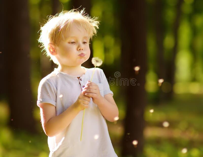 Sopros do rapaz pequeno abaixo do fluff do dente-de-leão Fazendo um desejo fotos de stock