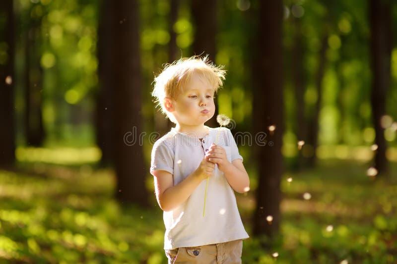 Sopros do rapaz pequeno abaixo do fluff do dente-de-leão Fazendo um desejo fotografia de stock royalty free