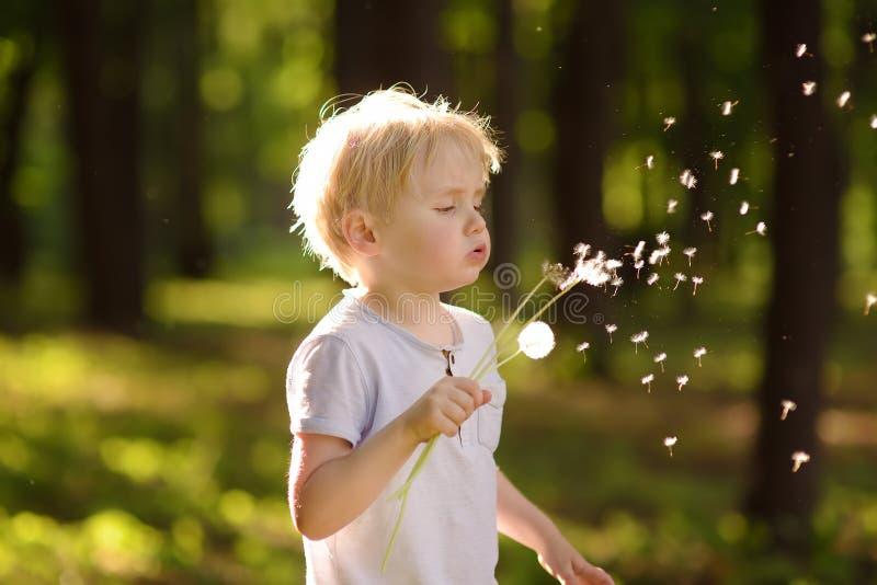 Sopros do rapaz pequeno abaixo do fluff do dente-de-leão Fazendo um desejo imagens de stock royalty free