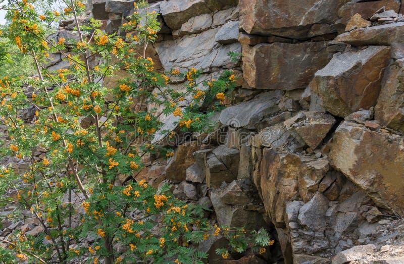 Sorbe à l'arrière-plan d'un mur de granit texture horizontal des panneaux de pin inextricable photographie stock libre de droits