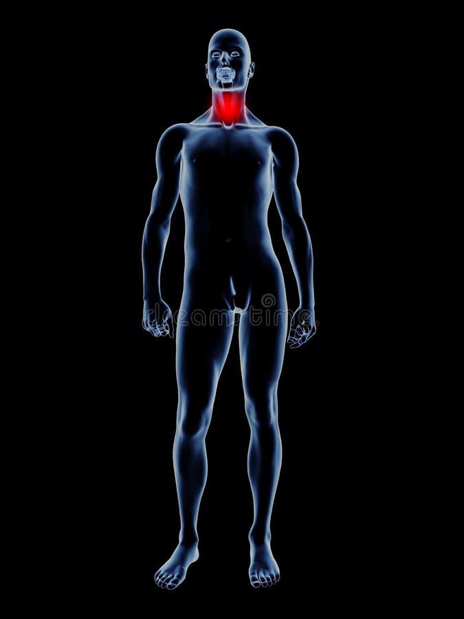 Sore Throat - Anatomy. Medical Illustration. 3D rendered Illustration royalty free illustration