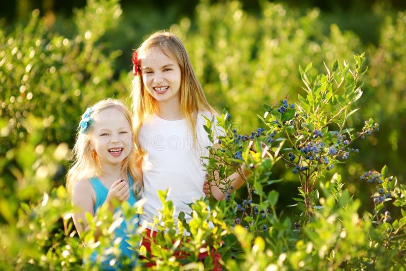 Sorelline sveglie che selezionano le bacche fresche sull'azienda agricola organica del mirtillo il giorno di estate caldo e soleg fotografia stock
