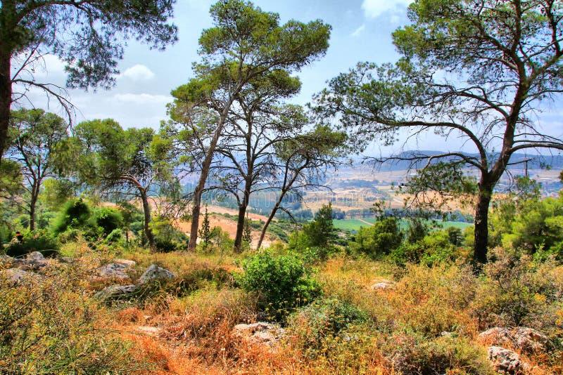 Soreq Avshalom洞旅行在以色列 免版税图库摄影