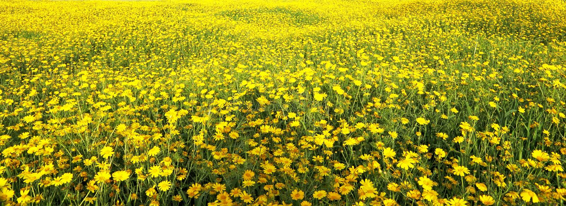 Primavera fotografie stock