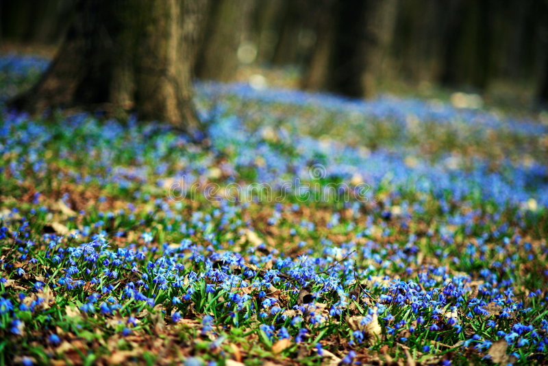 Download Sorgente immagine stock. Immagine di alberi, fine, botanica - 3129963