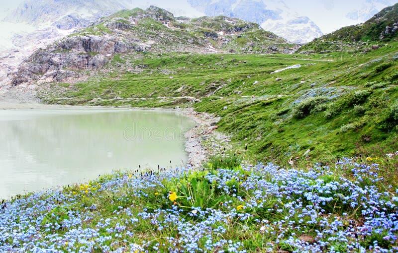 Sorgente alpina immagini stock libere da diritti
