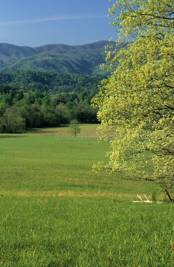 Sorgente, campi, montagne immagine stock libera da diritti