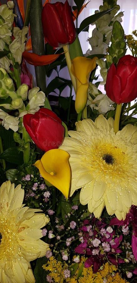 Sorgente colori dei fiori fotografia stock