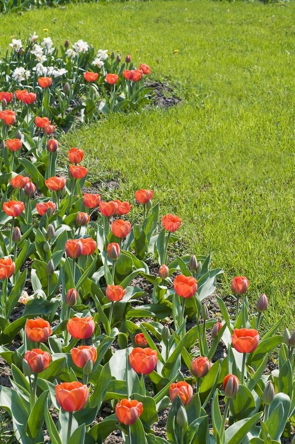 sorgente dei fiori fotografie stock