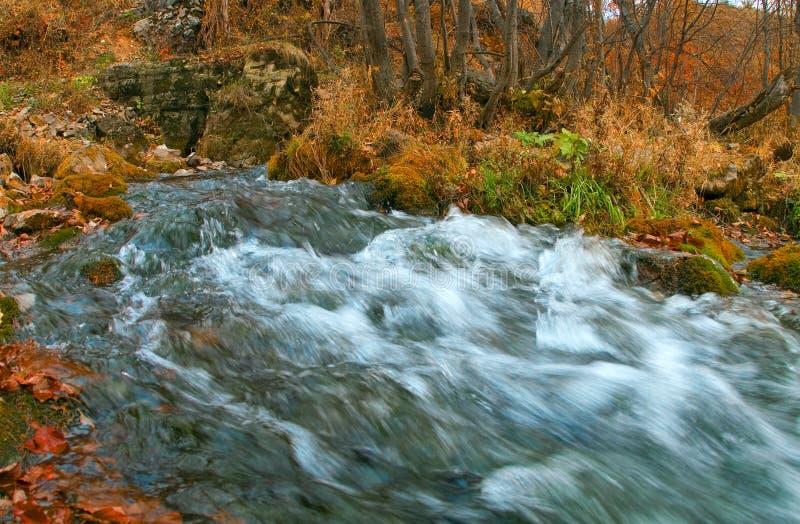 Sorgente di piccolo fiume. fotografia stock