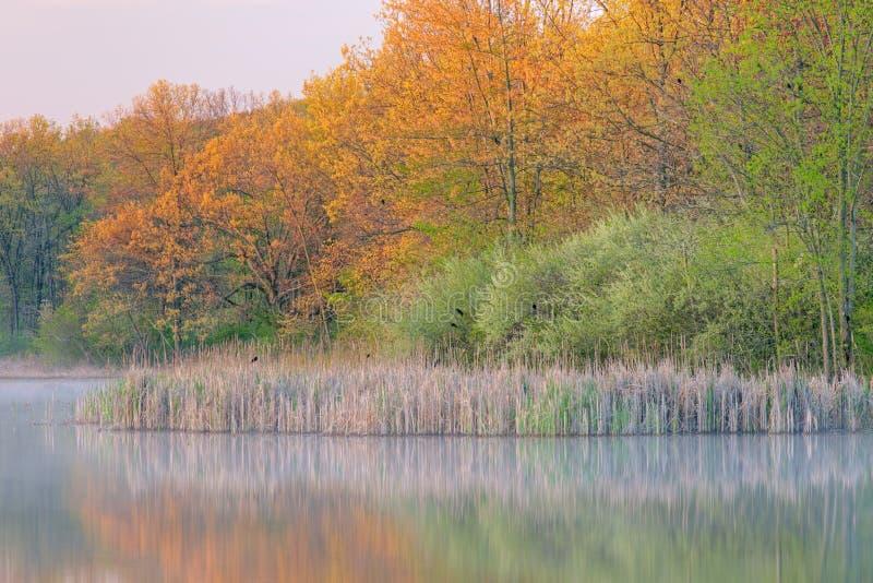 Sorgente, lago Whitford fotografie stock libere da diritti