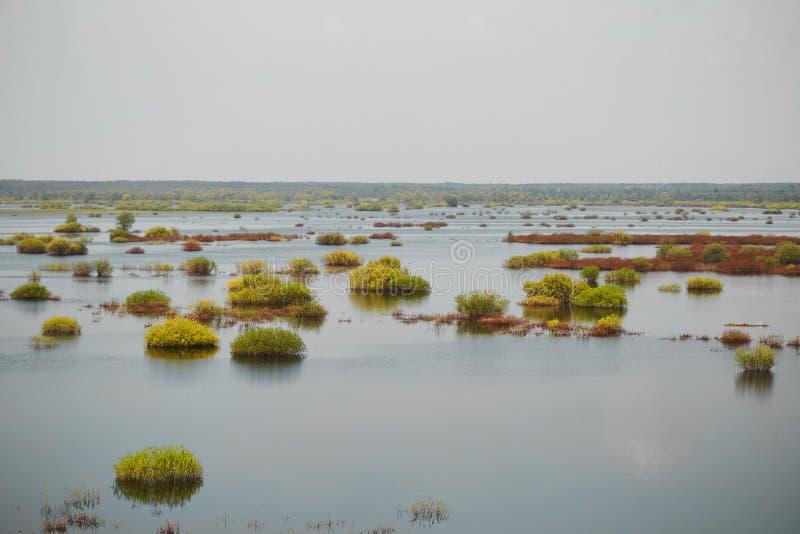 Sorgente prato del terreno alluvionale sommerso da un fiume immagini stock libere da diritti