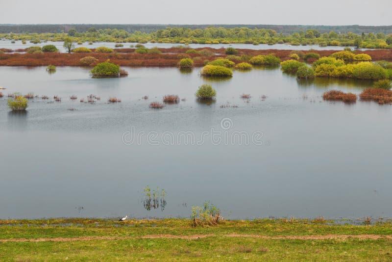 Sorgente prato del terreno alluvionale sommerso da un fiume fotografie stock libere da diritti