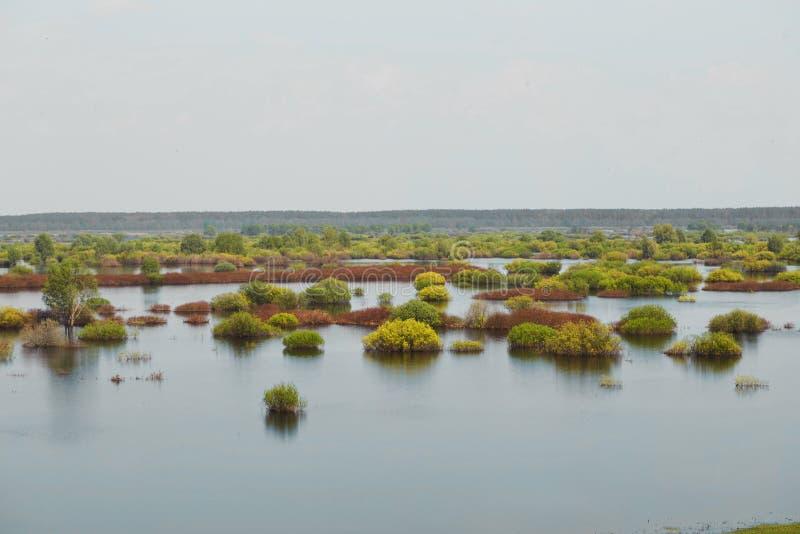 Sorgente prato del terreno alluvionale sommerso da un fiume fotografia stock libera da diritti