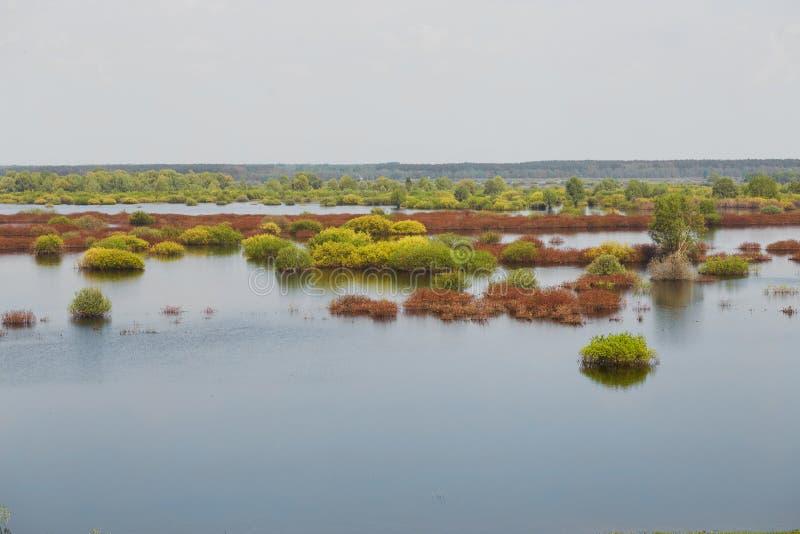 Sorgente prato del terreno alluvionale sommerso da un fiume fotografie stock