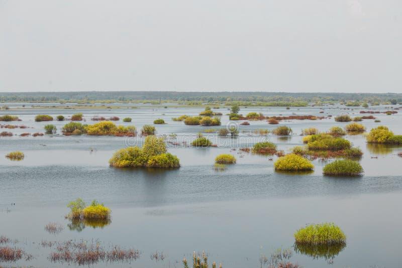 Sorgente prato del terreno alluvionale sommerso da un fiume immagini stock
